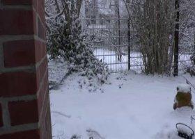 SWEET_SELINA - SNOW PEE